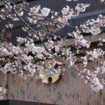 学校選択問題分析攻略法 埼玉県名門公立難関上位20校 受験情報